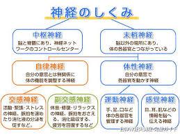 失調 症 神経 食べ物 自律 【自律神経失調症】体に悪い食べ物トップ3